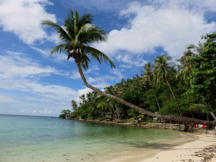 טיול לתאינד, קופנגן, PALM TREES, בטן גב, סיוון סטרומזה, חופשה