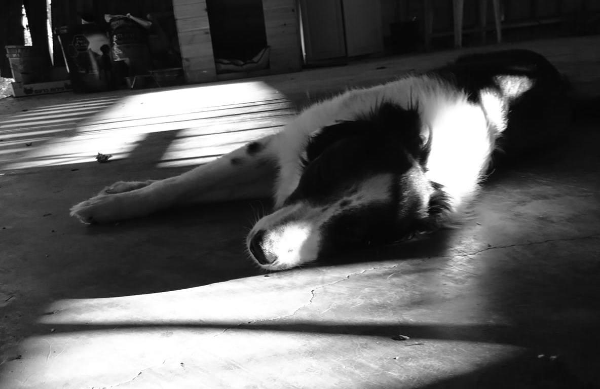 אילוף כלבים, איך לטפל בכלב, בורדר קולי, איך לאמץ כלב, מאלף כלבים מומלץ, כלבים חמודים, סיוון סטרומזה